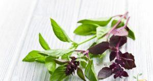 plante care scad tensiunea arteriala